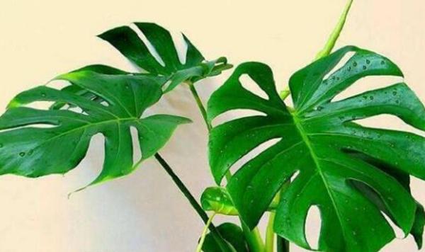 去除甲醛好的植物有哪些